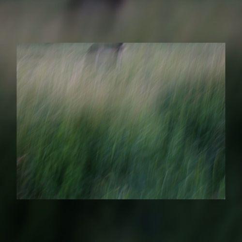 Qu'ai-je vraiment vu de vous ? EyeEm Best Shots Abstract Abstractart EyeEmBestPics EyeEm Nature Lover Vert Blur Green Blurry Minimalism