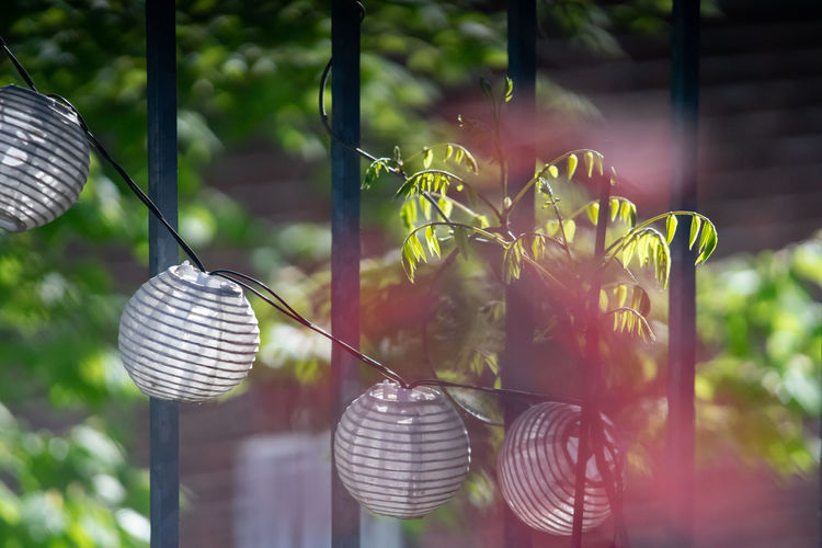 Close-up of light bulbs hanging from plant