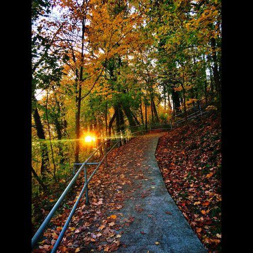 Sunset Evening Walking