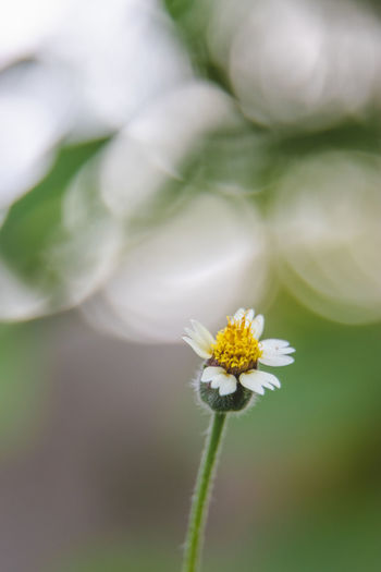 Flower Flowering Plant Freshness Fragility Plant Vulnerability  Growth Beauty In Nature Close-up Petal Flower Head Inflorescence White Color Day No People Nature Selective Focus Focus On Foreground Outdoors Pollen