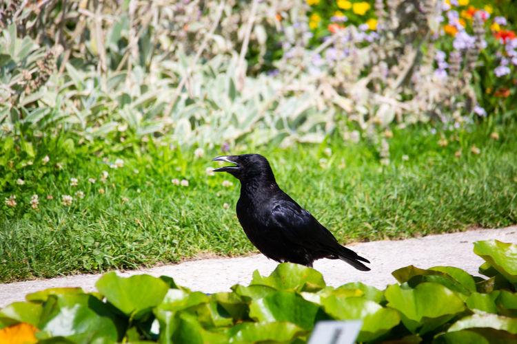 Black bird perching on a plant