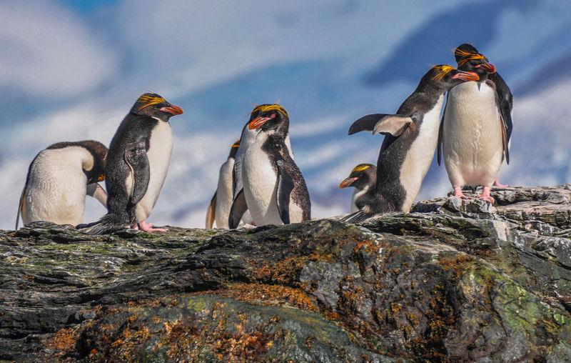 Flock of birds on rock against sky
