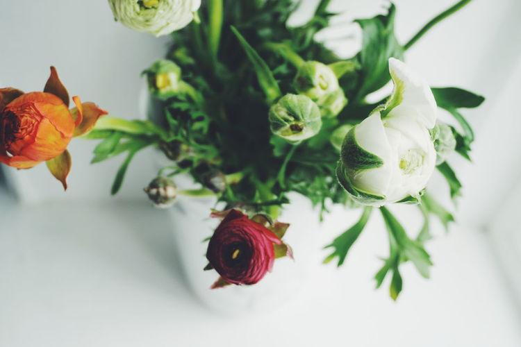 Close-up of ranunculus flowers