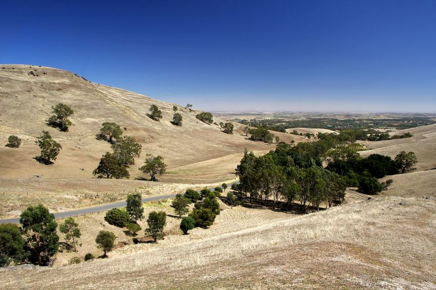 Sunburnt hills and fields during summer in the Barossa Valley South Australia Australian Landscape Barossa Valley Travel Photography Arid Climate Arid Landscape Beauty In Nature Blue Clear Sky Day Dry Landscape Nature No People Outdoors Road Rural Scene Scenics Sky Summer Sunburnt Country Tree