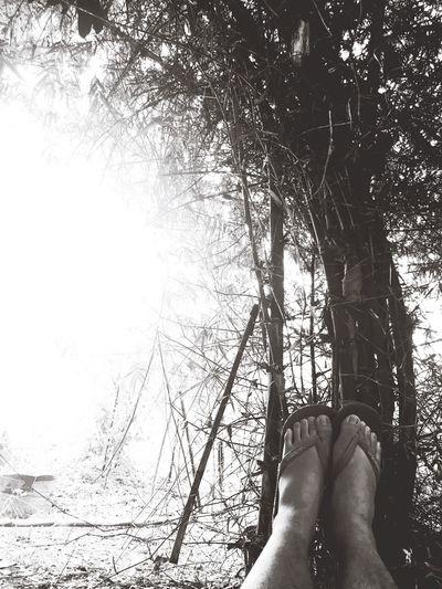 Overpowering Light first  Nature One Lavish Lifestyle Bettertogether Photog Yette First Eyeem Photo