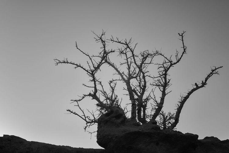 The Lone Shrub Bird Tree Branch Bare Tree Winter African Elephant Vulture Bird Of Prey Silhouette Rural Scene Single Tree Dead Plant Deciduous Tree Oak Tree Dead Tree Fallen Tree Driftwood Tree Area Dried Plant Rocky Mountains Wilted Plant