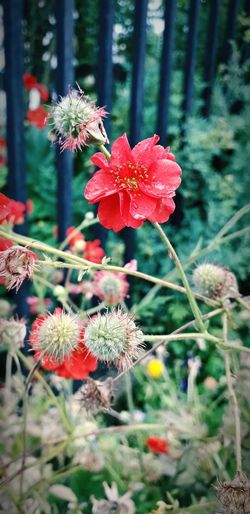 red flower with