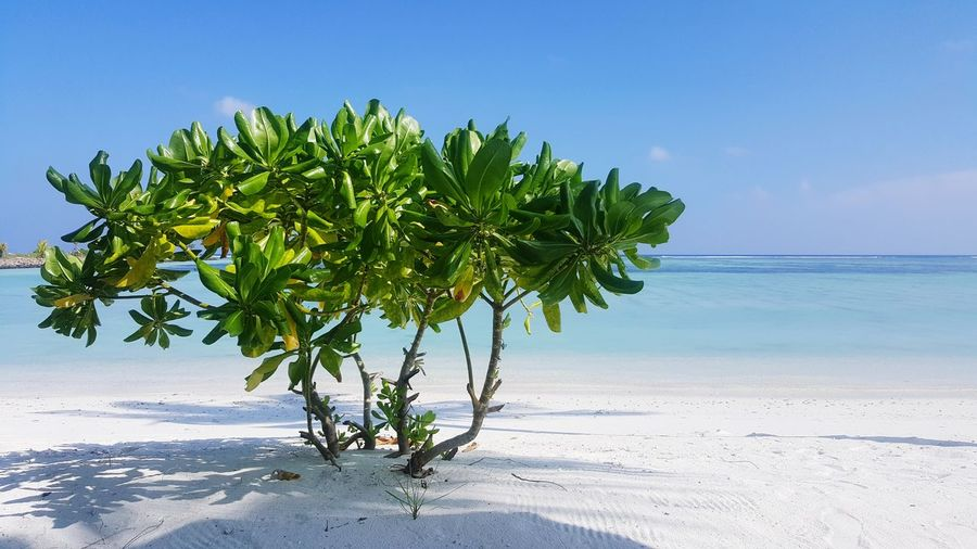 Dhiffushi beach, Maldives Maldives Island Dhiffushi Beach Sea Sand Tree Island Sky