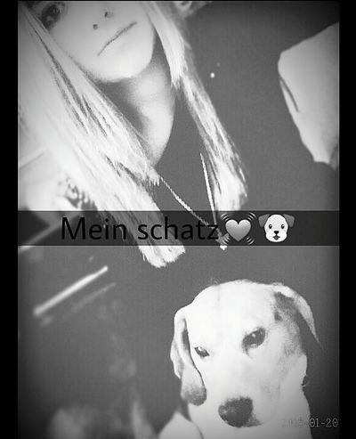 Love ♥ Mydog IchLiebeDich!♥ Meiner Mein Hund Schatz Einundalles Model Dog 2015