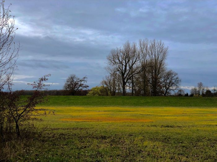 Autumn day in Worringen near the Rhine River Autumn colors Plant Tree Sky Field Tranquil Scene Environment Beauty In Nature Cloud - Sky Landscape Nature Rural Scene Grass No People Day