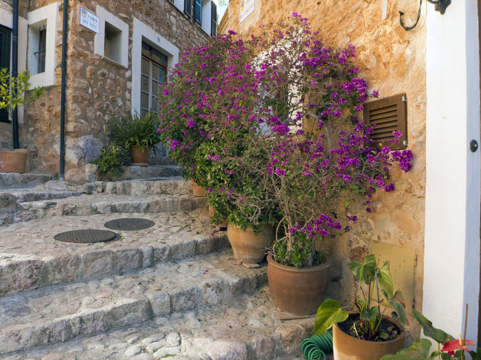Calm Footpath Mallorca Mediterranean  Plant Pueblo SPAIN Stairs Architecture Cobblestone Flower Flowers Growth Hpuse Idyllic Plant Pot Potted Plant Small Staircase Street Town Window Box