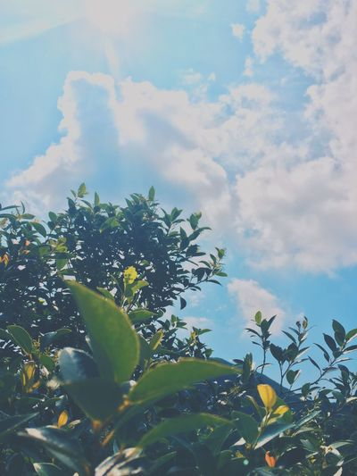 🍃 Leaf Nature Look Around You Enjoy The Little Things Hiking Weekends Growth Sky Freshness Plant Beauty In Nature Flower Low Angle View Yellow Green Color Vibrant Color Cloud Cloud - Sky Fragility Blue Agriculture Day Outdoors Springtime