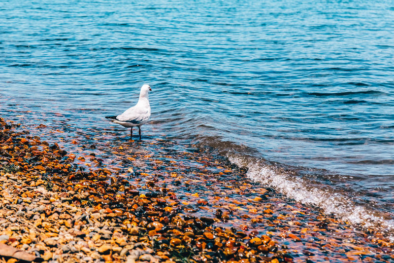 Animal Themes Animal Wildlife Animals In The Wild Beauty In Nature Bird Day Lake Macquarie Nature No People One Animal Outdoors Perching Sea Water White Color
