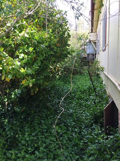 Wild urban spaces Lush Foliage Rustic Overgrown Side Of My House  Plant Green Color Growth Tree Mode Of Transportation Day Nature Building Exterior