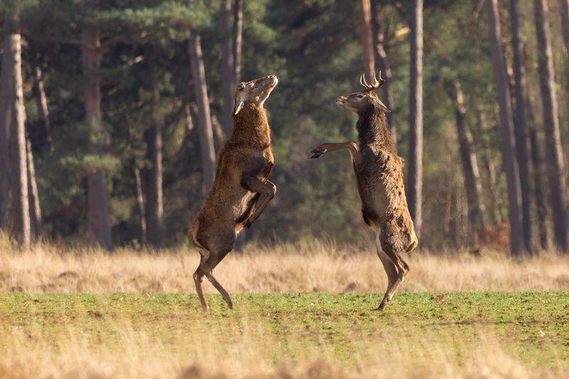 Deer EyeEm Selects Animal Themes Animal Animal Wildlife Animals In The Wild Group Of Animals Mammal