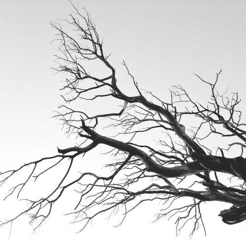 Trees Blackandwhite Supernormal Don Filter