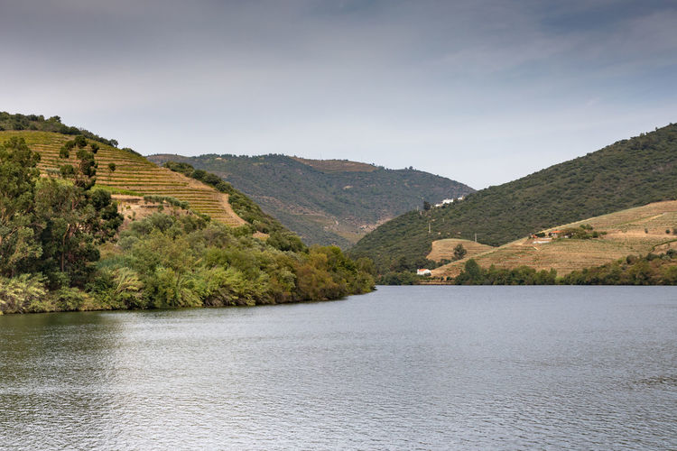 Douro river Portugal surrounded by hillside vineyards Douro  Portugal River
