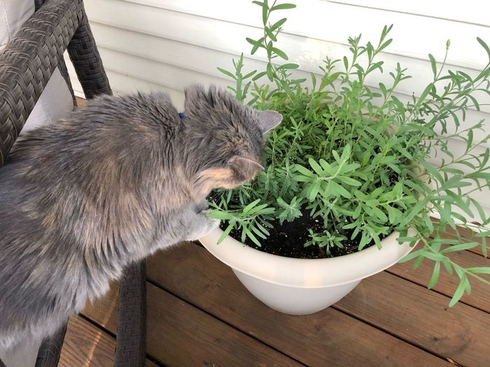 Side view of a cat on potted plant