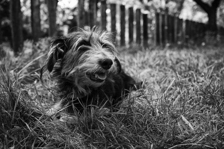 Close-up of dog in grass