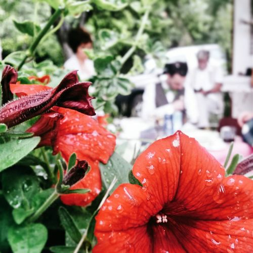 Showcase June Flowers Wedding Nature_collection Mobilephotography Wedding Day EyeEm Nature Lover Perfect Nature Bosnia And Herzegovina Negative Space Lakeside Boracko Lake Eyem Best Shots Red Flower