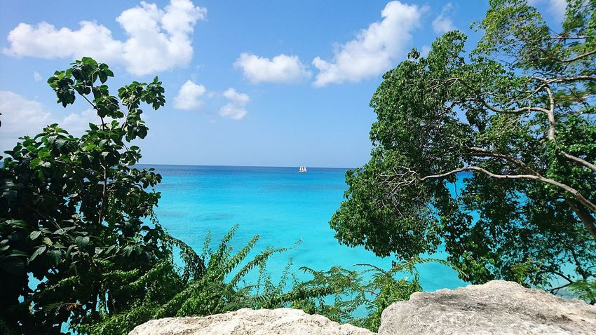 Sea Cloud - Sky Turquoise Colored Beach Blue Sky Tree Nature Water Horizon Over Water Tropical Climate Idyllic Day Outdoors Vacations Summer Scenics Tranquility Beauty In Nature Travel Destinations