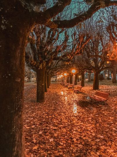Autum night Tree Plant Nature Architecture Autumn No People Built Structure Park Illuminated Sunlight Land Water Footpath Beauty In Nature