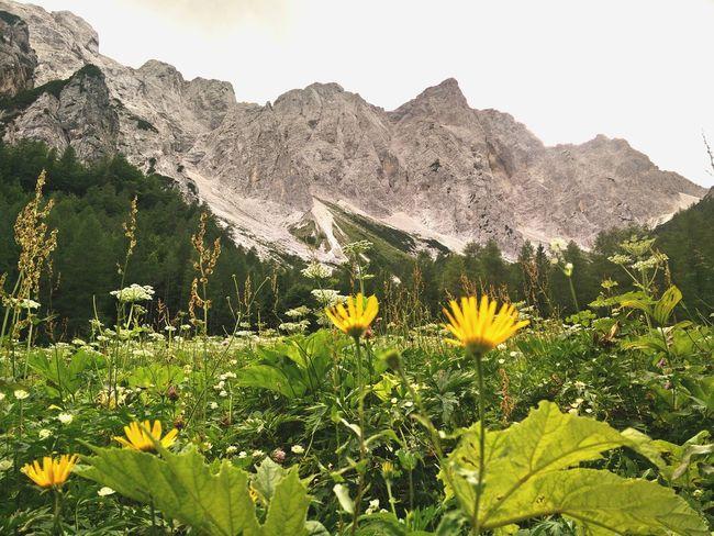 Hiking Mountains Nature Logarska Dolina