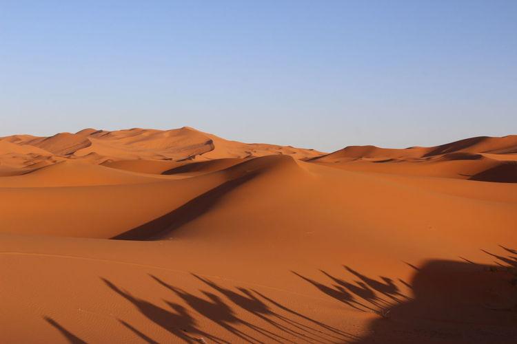 Camel Desert Deserto Desrt Scenes Dune Dunes Dunes Of Merzouga Marrakech