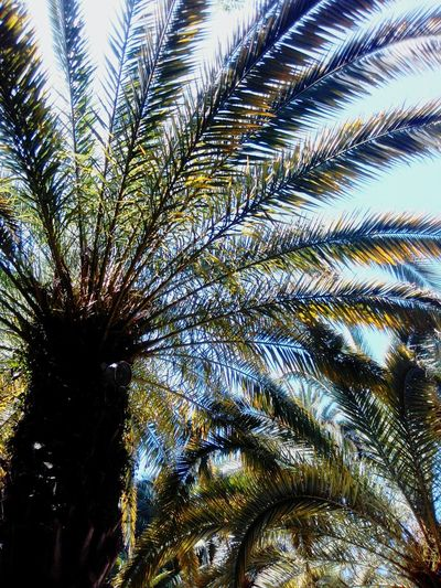 Palm Tree Tree Nature Абхазия2016 Абхазия странадуши лето2016 Summer First Eyeem Photo