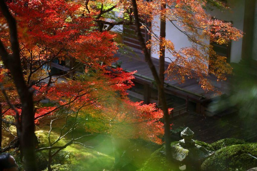 Nature_collection Autumn Japan EyeEm Nature Lover