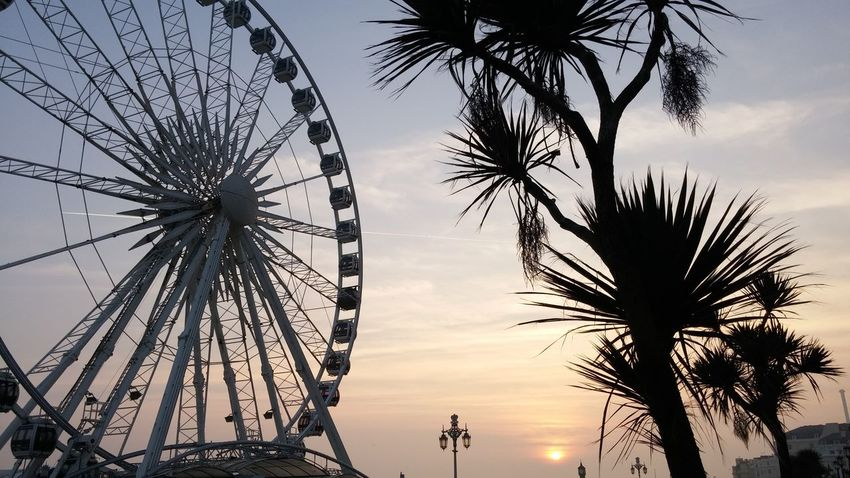 Amusement Park Amusement Park Ride Arts Culture And Entertainment Beauty In Nature Chain Swing Ride Cloud Cloud - Sky Enjoyment Ferris Wheel Fun Growth Large Low Angle View Nature No People Outdoors Palm Tree Scenics Sky Sunset Tall - High Tourism Tranquility Travel Destinations Tree