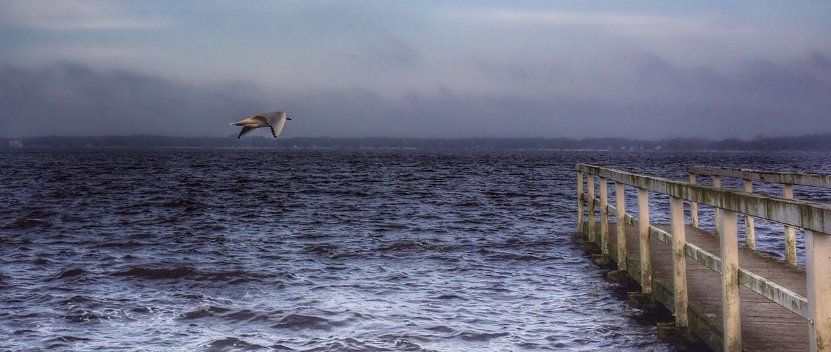 Side View Of A Bird Flying Over Calm Sea