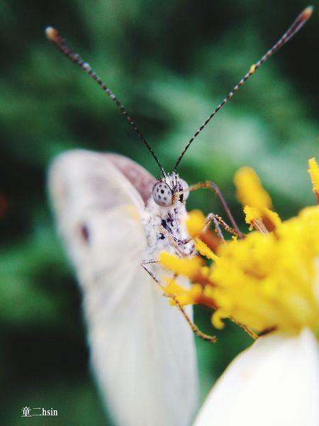 微距 蝴蝶