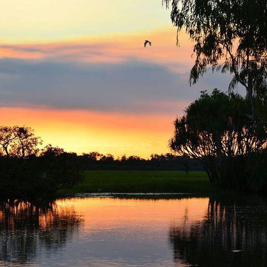 Yellow Water, Cooinda, Kakadu Nt Visitnt Visitaustralia Visitkakadu Sunset
