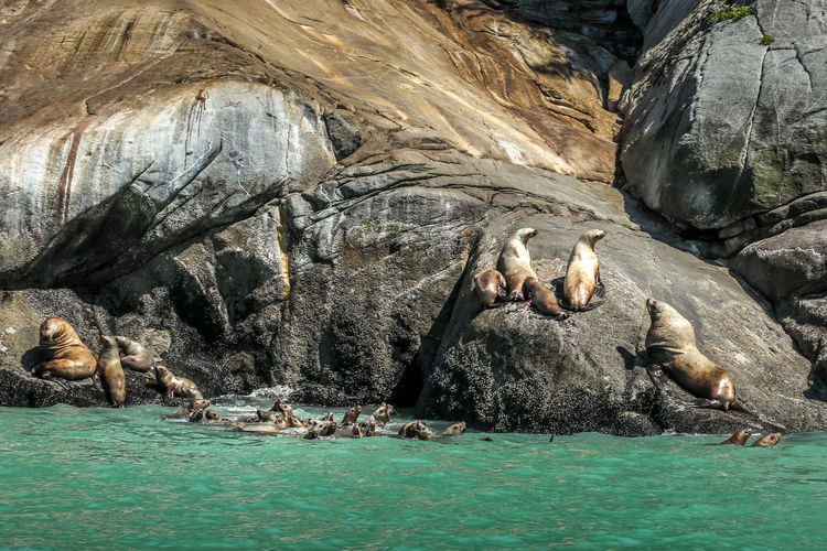 View of sea from rock with seals