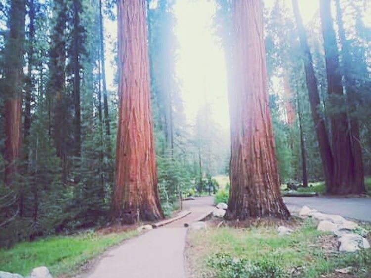 Sequoia National Park Redwoods Hiking California Nature Photography Save The Nature