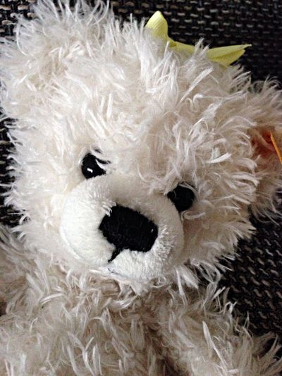 Petzi Teddy Enjoying Life