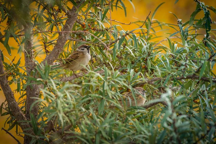 Birds enjoying autumn Animal Themes Animals In The Wild Autumn Bird Bird On The Tree Birds Nature Yellow