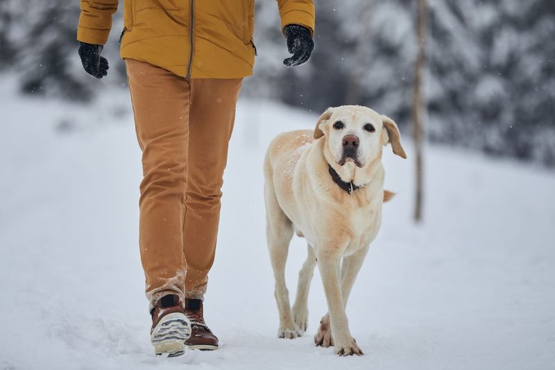 Low section of man with dog walking in snow