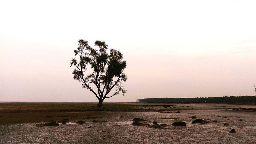 Hatiya, Bangladesh EyeEmNewHere Single Tree Extreme Weather Hurricane - Storm Sky Only