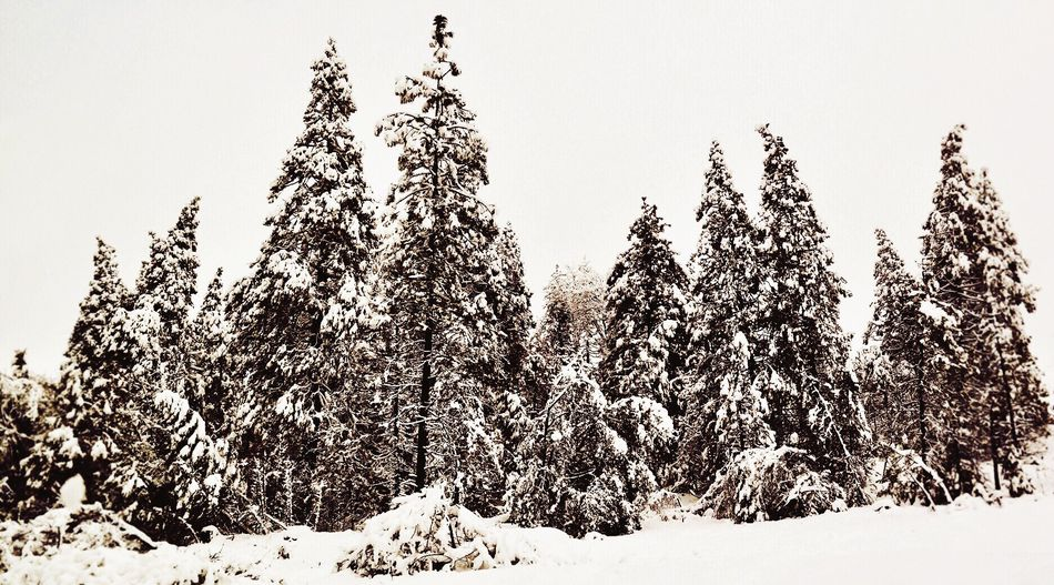 Tree Nature Snow Clear Sky Cold Temperature Winter Growth No People Beauty In Nature Tranquility Day Outdoors Scenics Field Tranquil Scene Landscape Sky First Eyeem Photo EyeEmNewHere Shades Of Winter