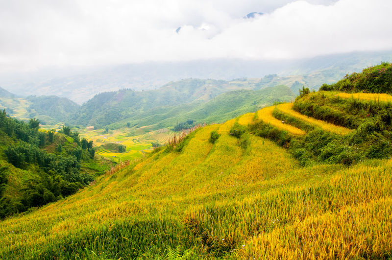 Vietnam Rice Fields Sapa Rice Fields. Sapa, Vietnam Vietnam Agriculture Beauty In Nature Cloud - Sky Crop  Field Grass Green Color Hill Landscape Multi Colored Nature No People Outdoors Rice Fields  Rice Fields And Mountains Rice Fields And Water Rural Scene Scenics Sky Tranquil Scene Tree