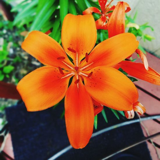 Flower Plant Nature Freshness Beauty In Nature Day Flower Head Close-up Outdoors No People Fragility Orange Flowers
