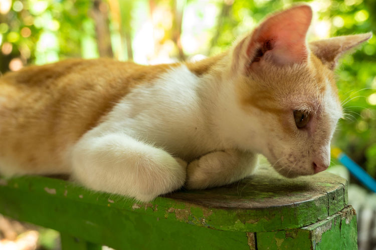Close-up of a cat resting on bench