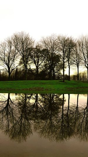 Reflection Water Reflections Winter Camperdown Park Scottishrowan Dundee