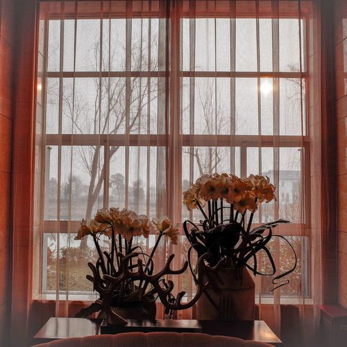 Window Window Indoors  Home Interior Transparent Plant Window Sill No People Day Close-up EyeEm Best Shots From My Point Of View Exceptional Photographs Shanghailife Indoors  Tranquility Flower Warm Atmosphere