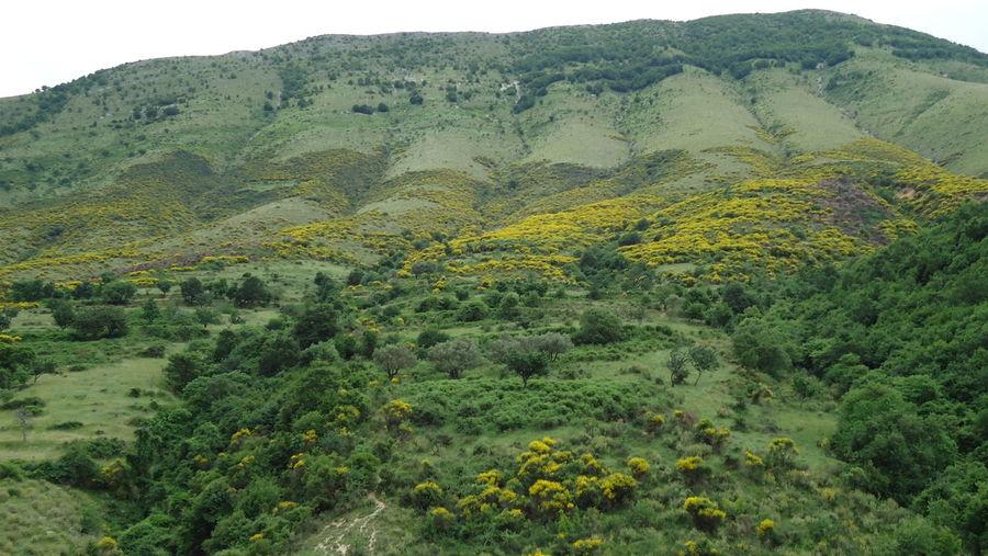Балканы. Evropa Nature Flowers Montains    Balkans Europe
