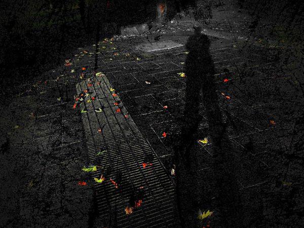 オレシャドウ Light And Shadow 公園 EyeEm Best Shots Urban Landscape Urbanphotography Urban Nature EyeEm Best Edits 枯葉 Leaf 🍂 Myself