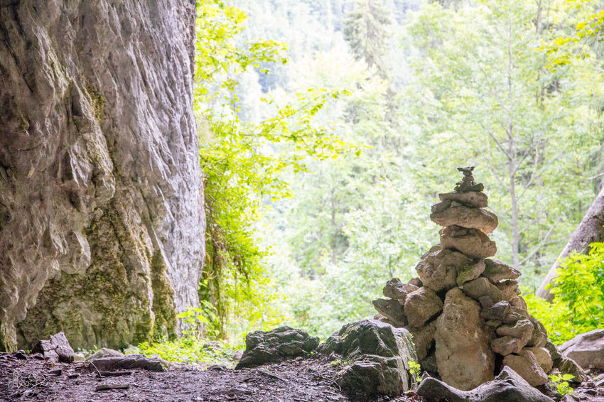 Padis, Transylvania Hiking Hungary Padiș Romania Transylvania Beauty In Nature Day Forest Hungarian Nature No People Outdoors Rock - Object Scenics Stack Stone Material Tranquil Scene Tree