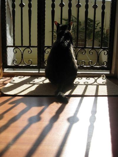 Alertness Cat